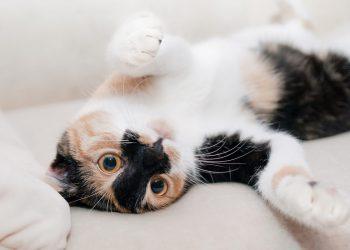 Katzenhaare saugen (Tipps) | Ist das Einsaugen ein Problem?
