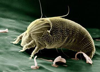Staubsauger gegen Bettmilben (Tipps) | Wie Milben entfernen?